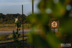 The sunrise reflects off the 12 Fires Winery sign, seen through vines